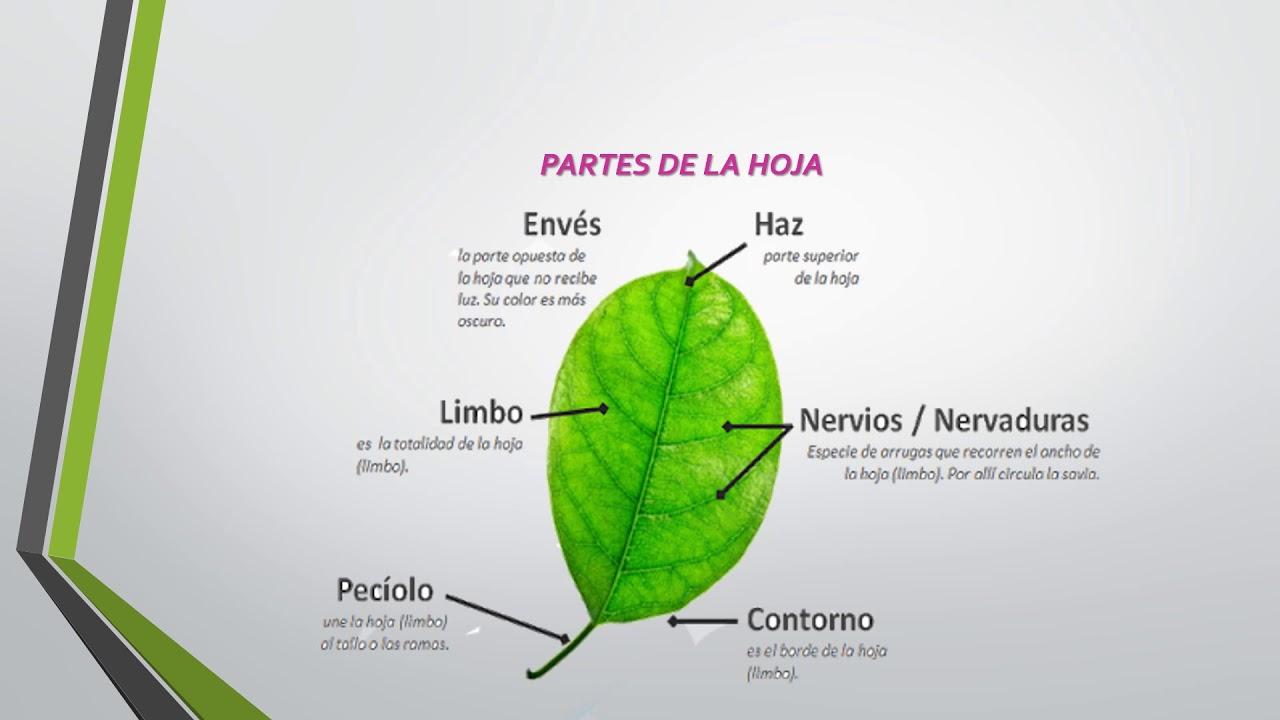 FOTOSINTESIS, OBTENCION DE ENERGIA - YouTube