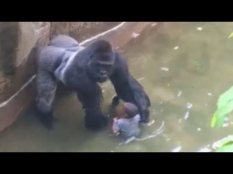 When Gorillas Attack Mp3