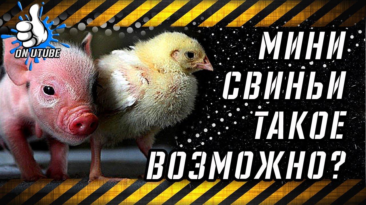 Видео Смешные Животные Популярные |  Приколы 2019 Приколы с Животными New - Подборка