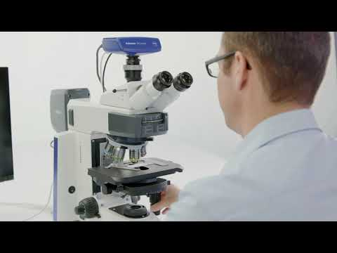 How-to: Multichannel Fluorescence Imaging (Manual Exposure) - ZEISS Axioscope 5