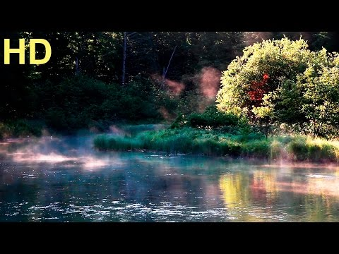 Relaxing Birdsong - HD Lake and Forest