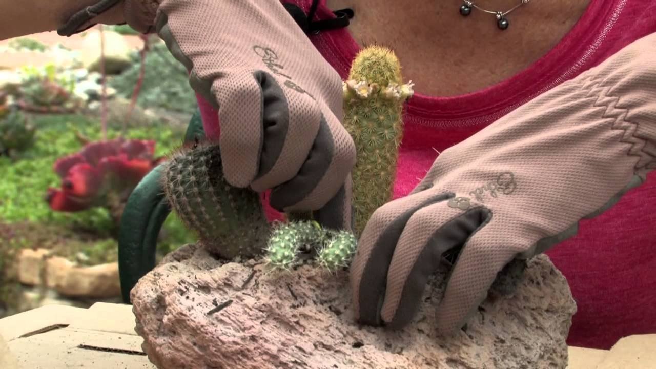 How To Plant Cacti In A Dish Garden : Gardening U0026 Flowers   YouTube