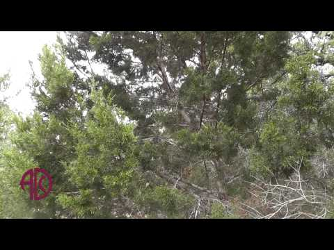 How To Manage Cedar Pollen Allergies In Central Texas - ADC
