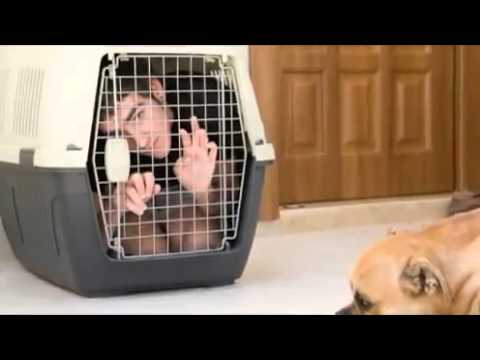 dog-training-secret