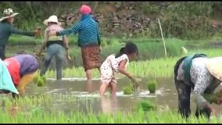 Tou Vue Ncig Saib Hluas Nkauj Sab Xam Nyoos 14-6-2017