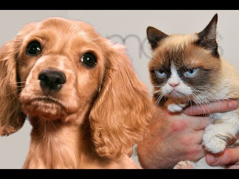 ZOOLAND 🐱  CATS AND DOGS HATE KISSES !!! 😘  😚 🐶 😺 Funny Animals Compilation 2018 !!! 😊 😋 😎 🍓