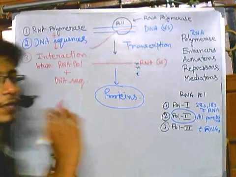 Eukaryotic transcription part 1: introduction