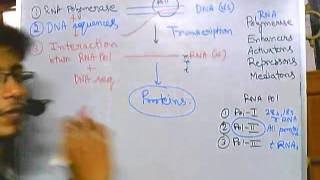 Eukaryotic transcription part 1: introduction