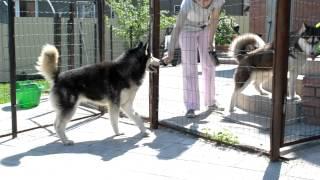 Герда и Янки