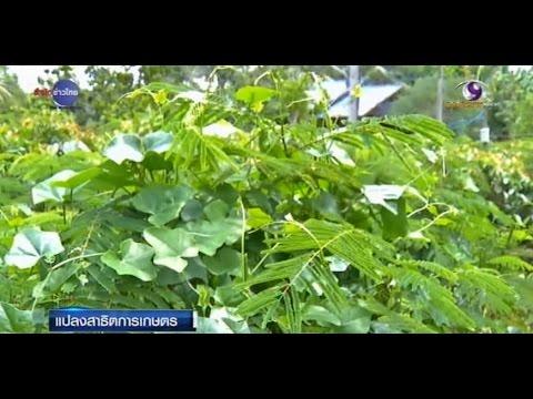 เกษตรทำเงิน : แปลงสาธิตเกษตร 1 ไร่ ปลูกผักปลอดสารพิษ 8 อย่าง