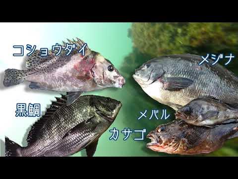 東扇島西公園 釣りポイント 2018年版