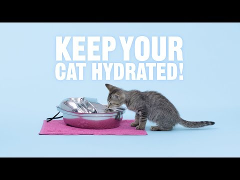 How Do I Get My Cat to Drink Water | Chewy