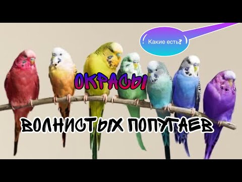 Вопрос: Каких видов бывают попугаи?