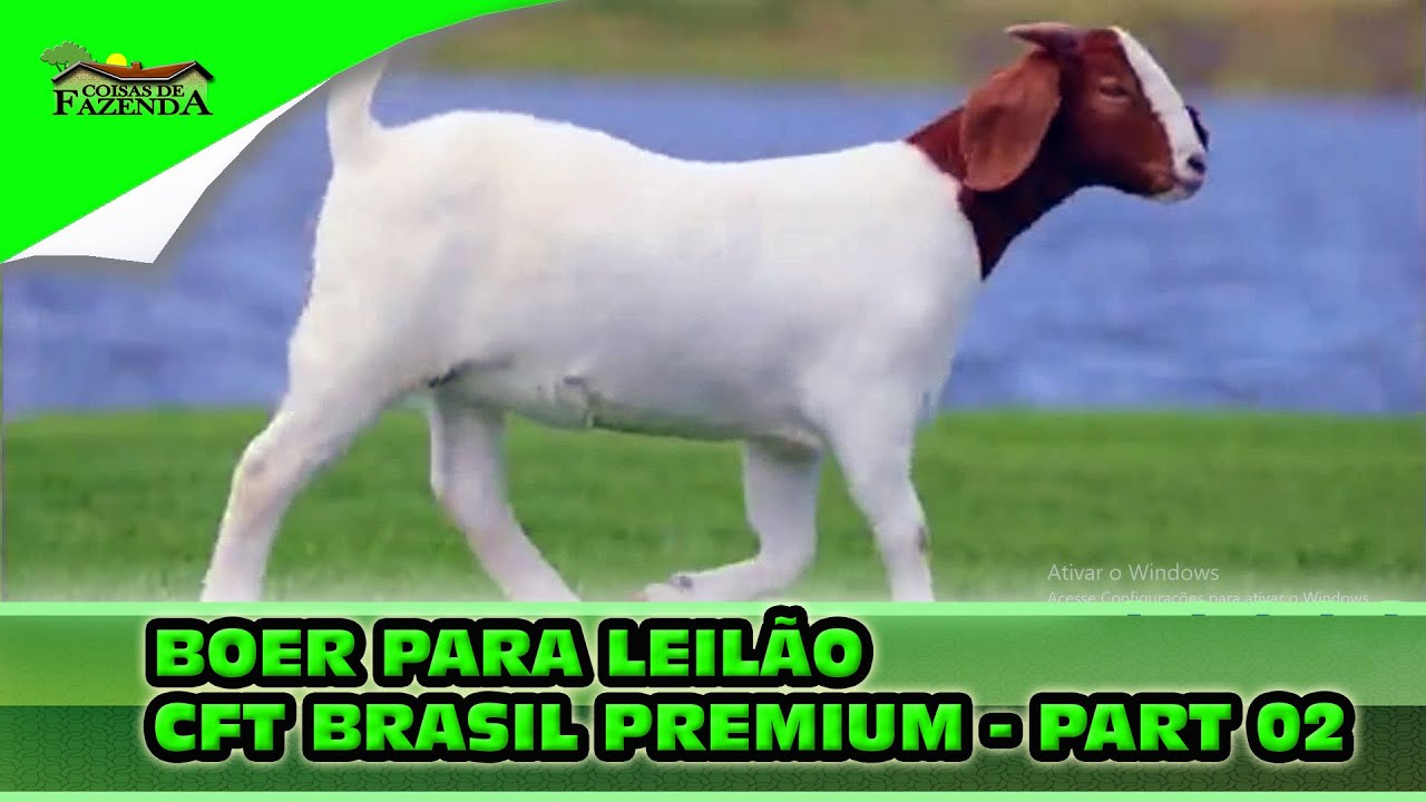 BOER PARA LEILÃO CFT BRASIL PREMIUM   PART 02