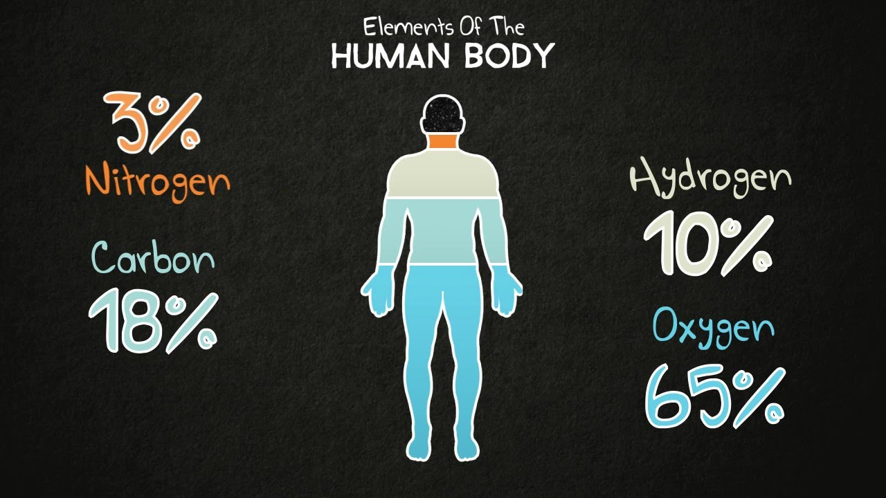 an overview of the compounds that compose the human body This content was stolen from brainmasscom - view the original, and get the already-completed solution here 1 classify six kinds of amino acids according to the functions that they serve in the human body, stating an example for each class.