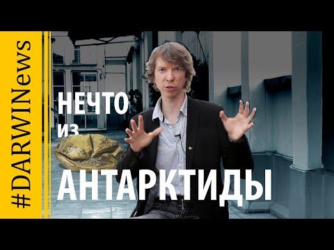 Мозазавры откладывали яйца. Ярослав Попов #DARWINews
