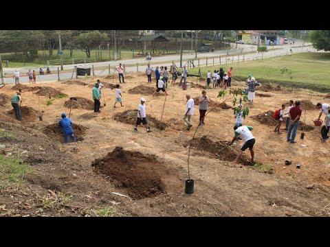 Revitalização da Área de Preservação Permanente do córrego Alambari - Projeto Ecomuseu SJC