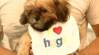 Shih Tzu Puppy Loves Hugs