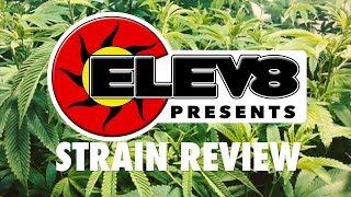 Strain Review: Strawberry Shortcake - ELEV8 Presents