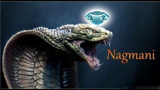 Nagamani Reality or Myth? Naag mani - Cobra Pearl Exists! cobra stone | manickam stone | snake stone