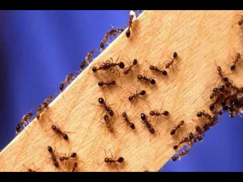 control ants in bathroom