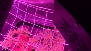 MARS HYDRO LED OVER VIEW 2 900w LED