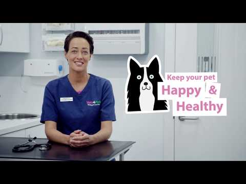 How To Spot And Treat Kennel Cough In Dogs | Vets4Pets