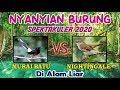Nyanyian Burung Spektakuler  Murai Batu Vs Nightingale Di Alam Liar  Mp3 - Mp4 Download