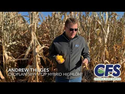 CFS Agronomist Andrew Thilges discusses Croplan 3899 VT29 Hybrid Highlights.