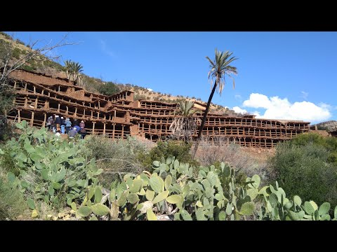 Maroc Tinzerki le plus grand et encien rucher (miel )collectif au monde