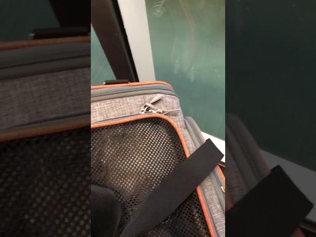 Anjuna kurz vor Boarding