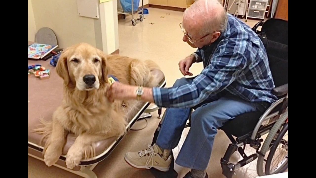 animal assisted therapy Are you a therapist, social worker, educator or health care worker looking for new ways to expand your practice and your professional toolbox are you looking to start you own animal.