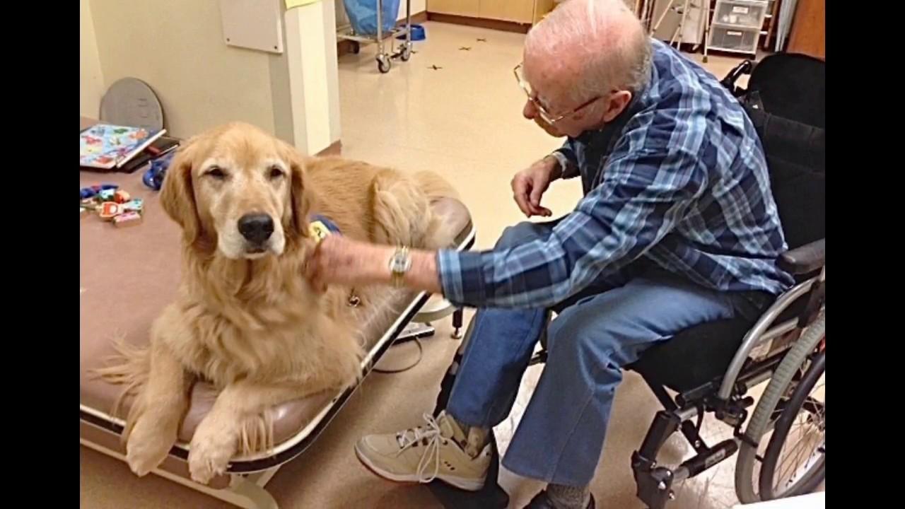 Animal-assisted therapy: Engaging the human-animal bond ...