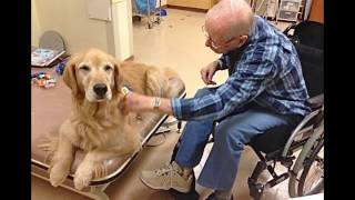 Animal-assisted therapy: Engaging the human-animal bond