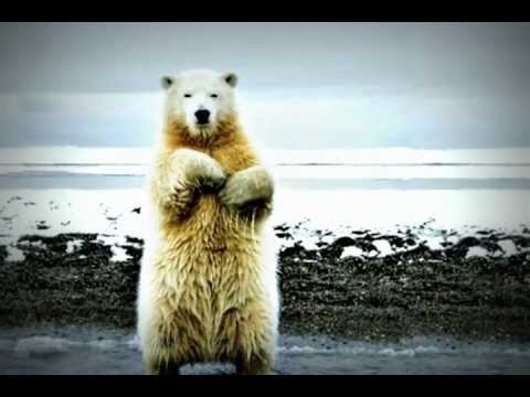 hqdefault dancing polar bear let's twist again youtube