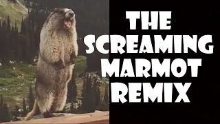 The Screaming Marmot - Remix Compilation