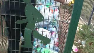 Машина по сбору пластиковых бутылок