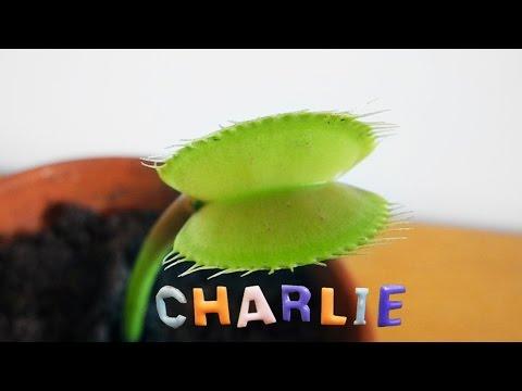 feeding-charlie-something-creepy
