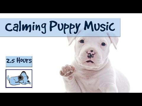 Relaxing Music for Puppies! Cure Separation Anxiety in Puppies with Music from Relax My Dog!