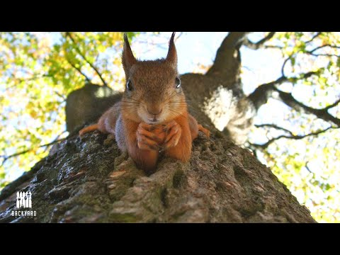 What Do Squirrels Eat: 7 Things To Feed Them And 3 You Shouldn't