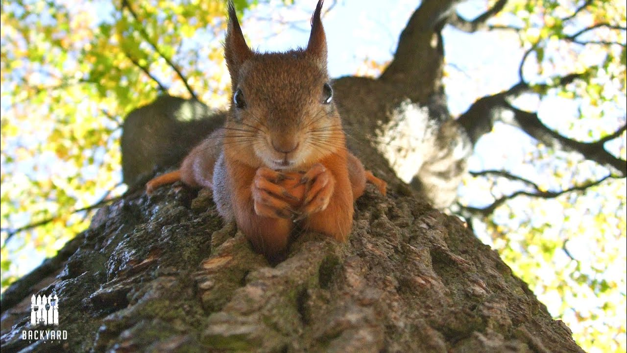 What Do Squirrels Eat 7 Things To Feed