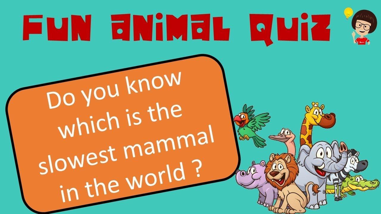 Lilquizwhiz Animal Kingdom Quiz 2 Fun Quiz For Kids Learning Videos For Children Youtube
