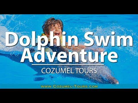 Cozumel Dolphin Swim Adventure Tour | COZUMEL TOURS