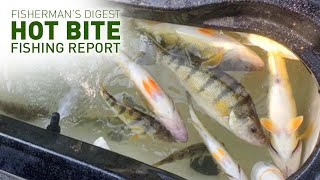 Great Perch Fishing Reports & More - Hot Bite Fishing Report - Sept 30th