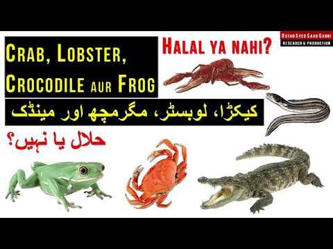 Crab Aur Lobster Halal Hai Ya Nahi