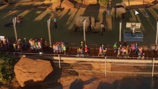 Rozwijamy karierę - Planet Zoo / 11.11.2019 (#4)
