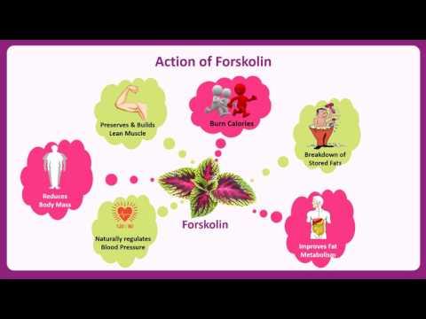 Geo-Fresh's Organic Forskolin Tablet