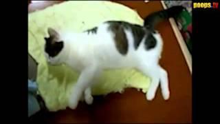 Коту снится серьезная сделка