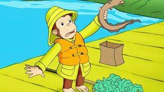 好奇的喬治 🐵Curious George Chinese 🐵好奇猴喬治去度假 🐵第1季 🐵动画片 🐵卡通 🐵动画 🐵Cartoon 🐵Animation