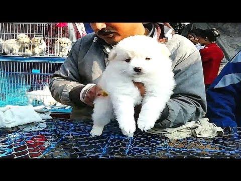 CUTEST PUPPIES MARKET | FUNNY & CUTE PUPPIES VIDEO  | GALIFF STREET DOG MARKET KOLKATA